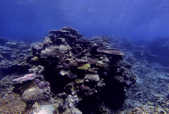 How is climate change impacting coral reefs, and is the outlook for reefs significantly better if we achieve the targets set by the Paris Agreement?