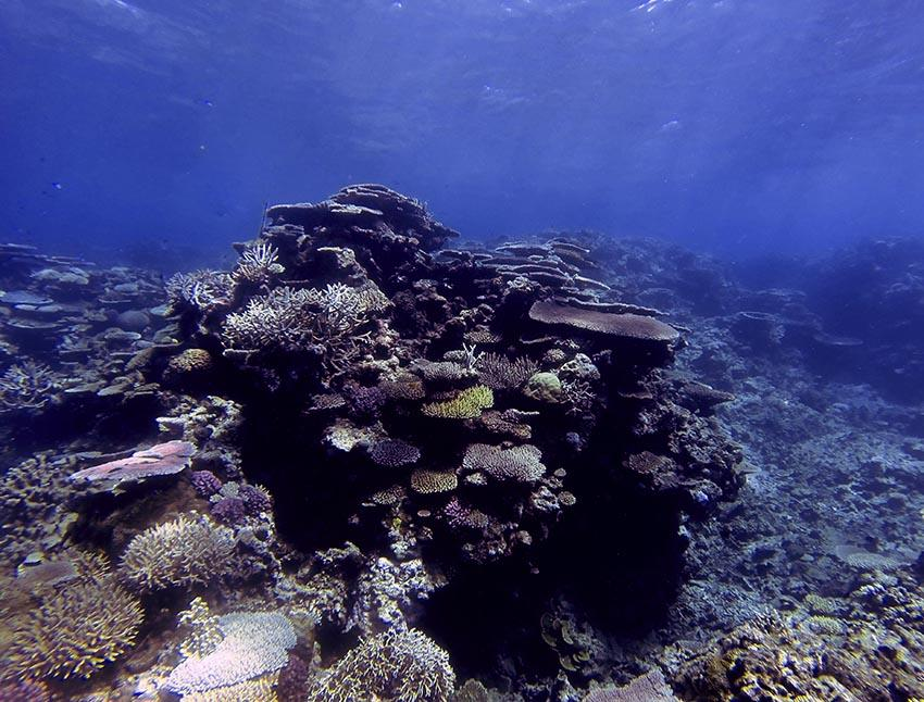 verkoopt groothandel outlet speciale verkoop What will climate change mean for corals? - A-id