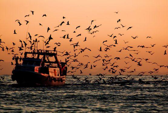 La presente proposta di legge prevede l'istituzione, in forma obbligatoria, del fishing for litter durante il fermo pesca. Il Fishing for Litter, concetto definito nel Fishing for Litter Strategy dell'UNEP, consiste nel conferimento a terra, da parte dei pescatori, dei rifiuti solidi non pericolosi; pescati accidentalmente durante le normali attività di pesca. Sono considerati rifiuti solidi non pericolosi anche gli attrezzi da pesca dismessi.